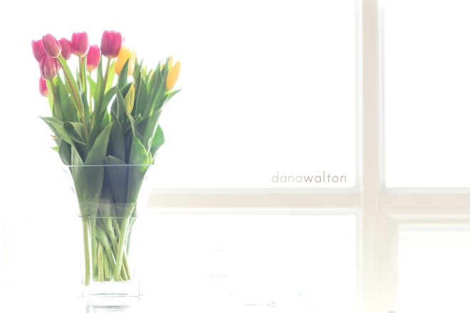 DSC_2408-Edit-3