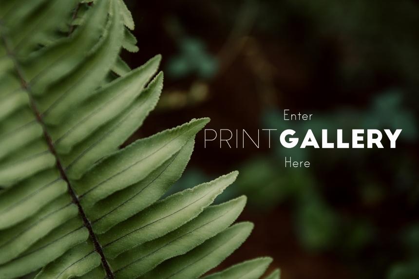 print gallery enter